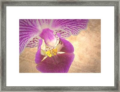 Purple Orchid 1 Framed Print by Rudy Umans
