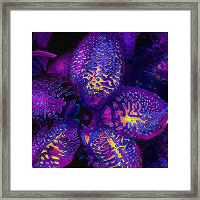 Purple Orchid Abstract Framed Print by Jane Schnetlage