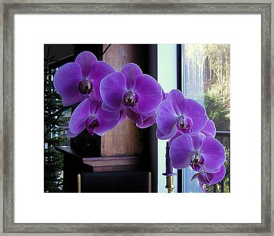 Framed Print featuring the photograph Purple Orchid by AJ  Schibig