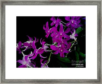 Purple Orchid Flower By Saribelle Rodriguez Framed Print by Saribelle Rodriguez
