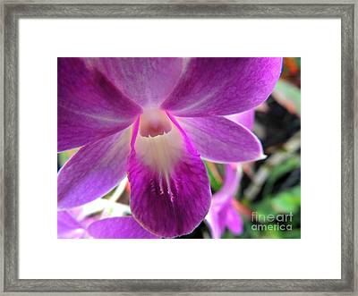 Framed Print featuring the photograph Purple Orchid by Kristine Merc