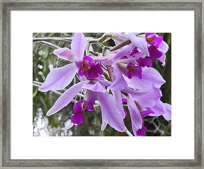 Purple Orchid Personality Framed Print