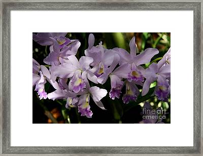 Purple Orchid Twig Framed Print by Christiane Schulze Art And Photography