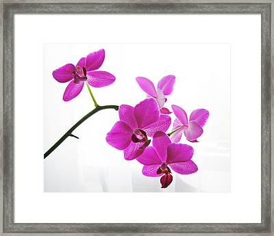 purple orchids II Framed Print