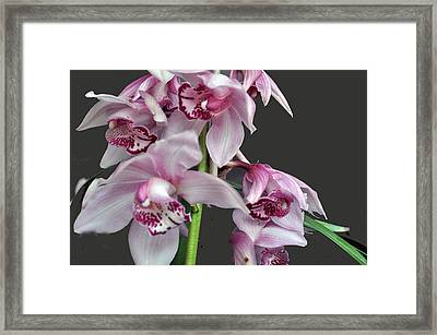 Purple Orchids Framed Print by Judith Russell-Tooth