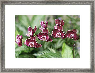 Purple Orchids Framed Print by Kathy Peltomaa Lewis