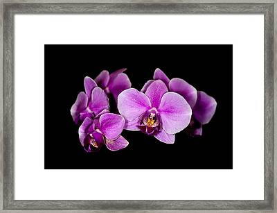 Purple Orchids Framed Print by Len Romanick