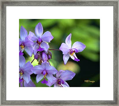 Purple Orchids Framed Print by Margaret Buchanan