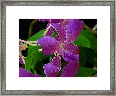 Purple Over Green Framed Print