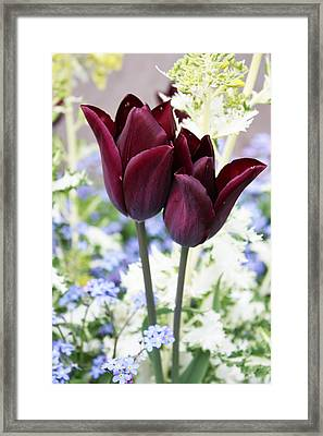 Purple Pair Framed Print