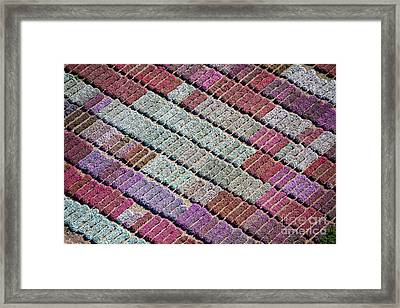 Purple Palette Framed Print by John Ferrante