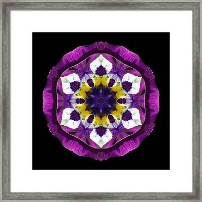 Purple Pansy II Flower Mandala Framed Print