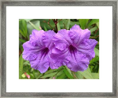 Purple Party Framed Print by Larry Spring