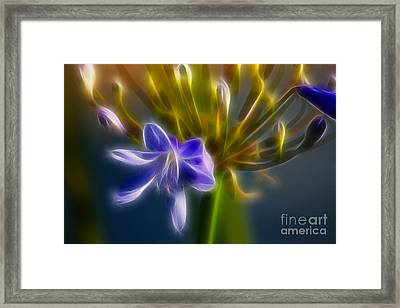 Purple Passion 6318-fractal Framed Print by Gary Gingrich Galleries