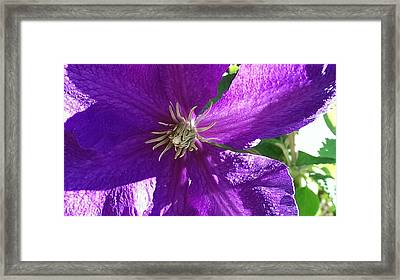 Purple Passion Framed Print by Bill Mohler