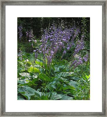 Purple Passion Facination2 Framed Print by Sheryl Rizzo