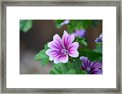 Purple Passion Framed Print by Jennifer  King