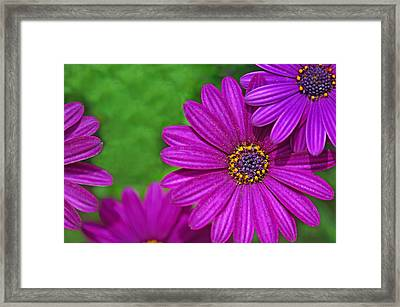 Purple Passion Framed Print by Joan Herwig