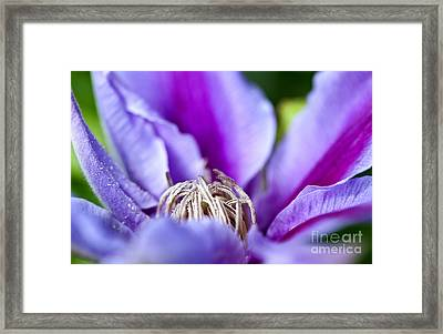 Purple Passion Framed Print by Lee Craig
