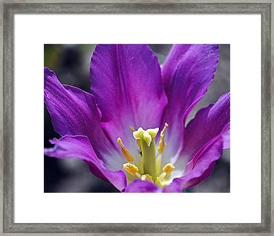 Purple Passion Framed Print by Leslie Cruz