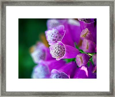 Purple Passion Framed Print by Tammy Smith