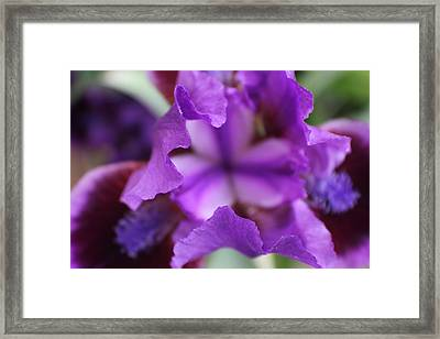 Purple Passion Framed Print by Trent Mallett