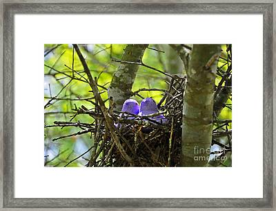 Purple Peeps Pair Framed Print by Al Powell Photography USA