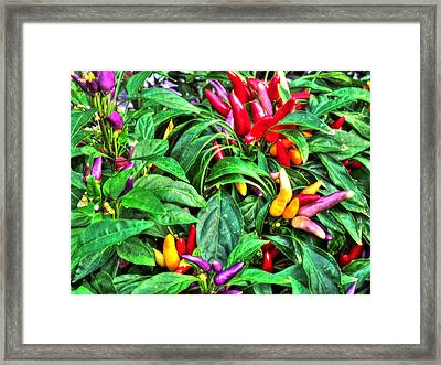 Purple Peppers Framed Print