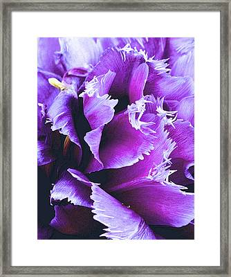 Purple Perfection Framed Print