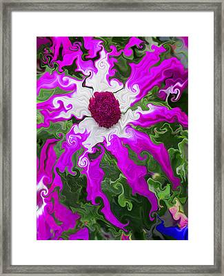 Floating Pericallis Framed Print by Kathy Moll