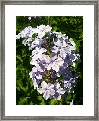 Framed Print featuring the photograph Purple Petals by Alohi Fujimoto