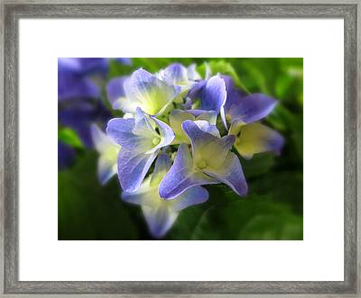 Purple Petals Framed Print by Jessica Jenney