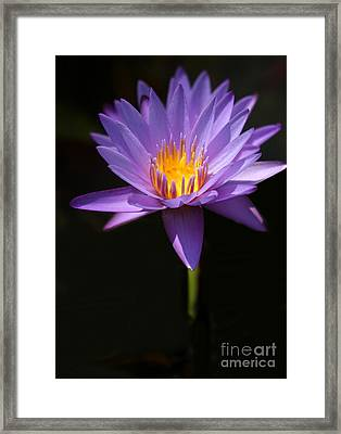 Purple Petals Framed Print by Sabrina L Ryan