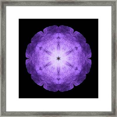 Purple Petunia I Flower Mandala Framed Print