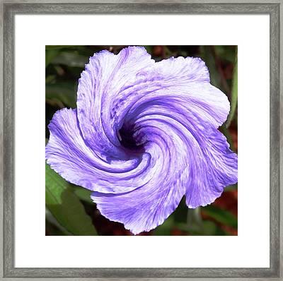 Purple Petunia Twirl Framed Print