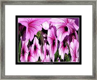 Purple Petunias Abstract Framed Print by Rose Santuci-Sofranko