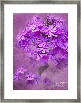 Purple Phlox Framed Print by Lena Auxier
