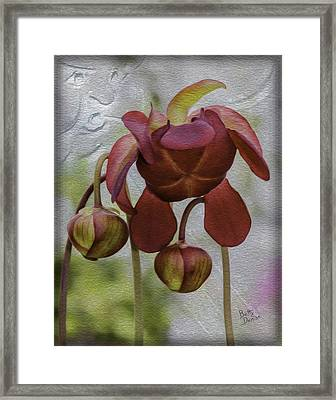 Framed Print featuring the photograph Purple Pitcher Plant by Betty Denise
