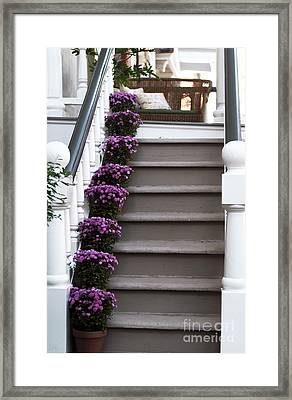 Purple Plants Framed Print by John Rizzuto