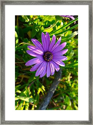 Purple Pleasure Framed Print