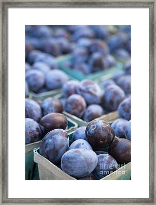 Purple Plums Framed Print by Rebecca Cozart