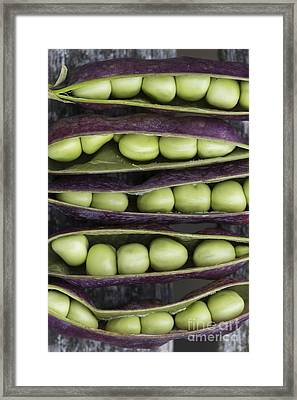 Purple Podded Pea Pattern Framed Print by Tim Gainey