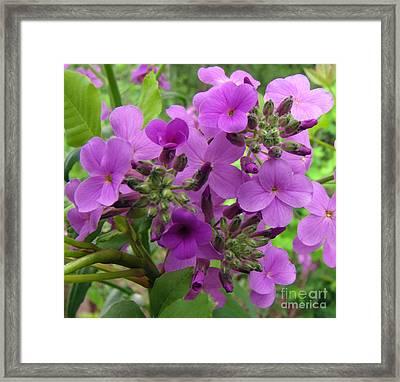 Purple Popping 1 Framed Print by Cedric Hampton