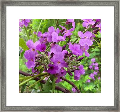 Purple Popping 2 Framed Print by Cedric Hampton