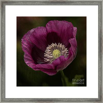 Framed Print featuring the photograph Purple Poppy by Vicki DeVico