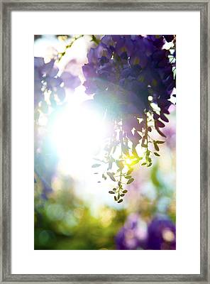 Purple Possibilities Framed Print by Peak Photography by Clint Easley
