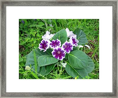 Purple Potted Flowers Framed Print by Aimee L Maher Photography and Art Visit ALMGallerydotcom