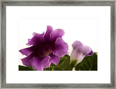 Framed Print featuring the photograph Purple Power by Robert Culver