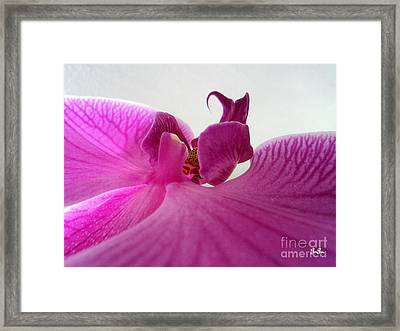 Purple Pretty Framed Print