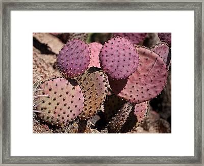 Purple Prickly Pear Cactus Framed Print by Rona Black